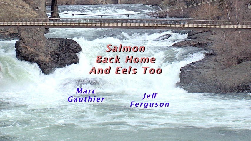 http://movies.at7c.com/SalmonEels/BSPI35XDv02-poster.jpg